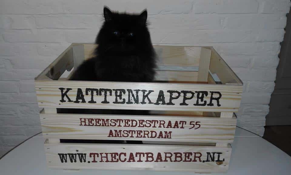 The Catbarber